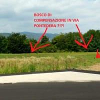 bosco compensazione-2